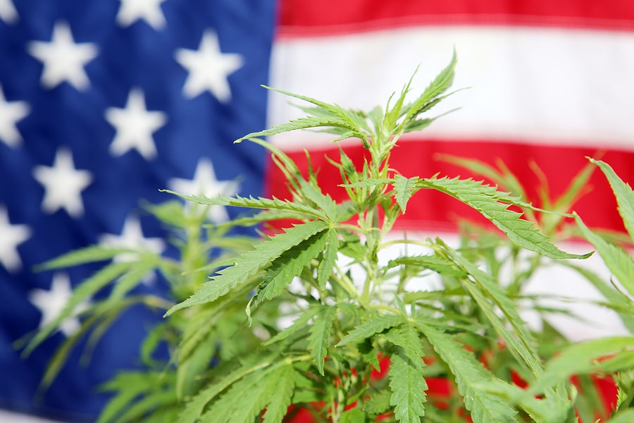 Read more about the article How Much Weed Can You Buy In Oregon?